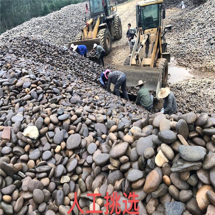 湛江鹅卵石批发 人工湖底造景鹅卵石 黑色鹅卵石 多规格鹅卵石厂家直销