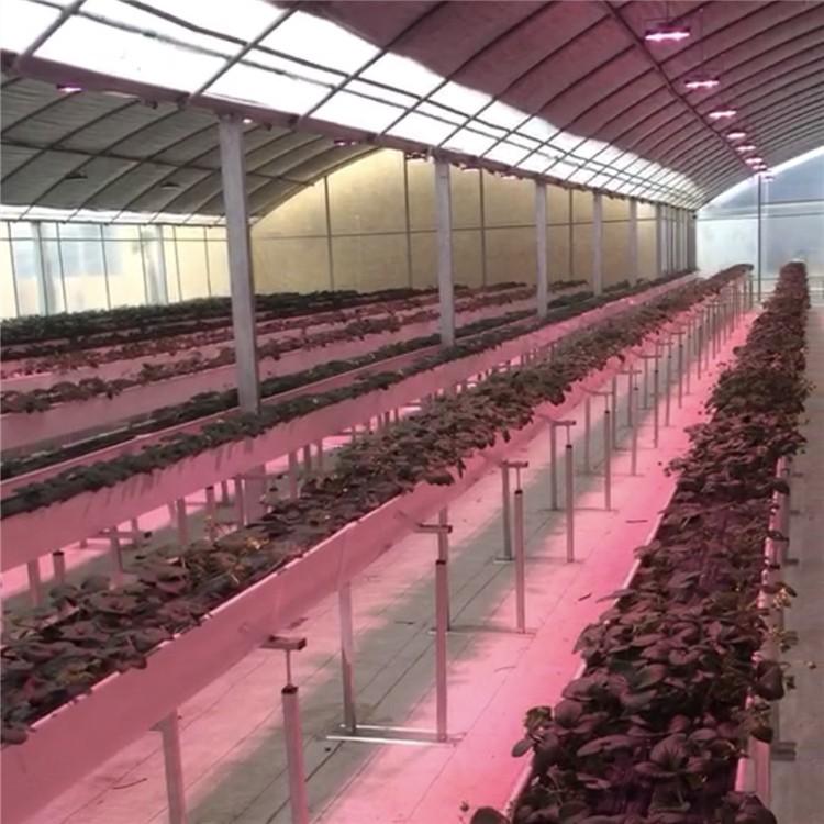 大棚草莓专用补光灯上色促花助长LED全光谱植物生长灯 工厂直销