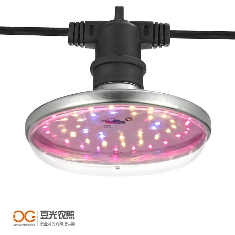 大棚火龙果补光灯LED植物生长灯  反季生长促花专用 补充光照不足